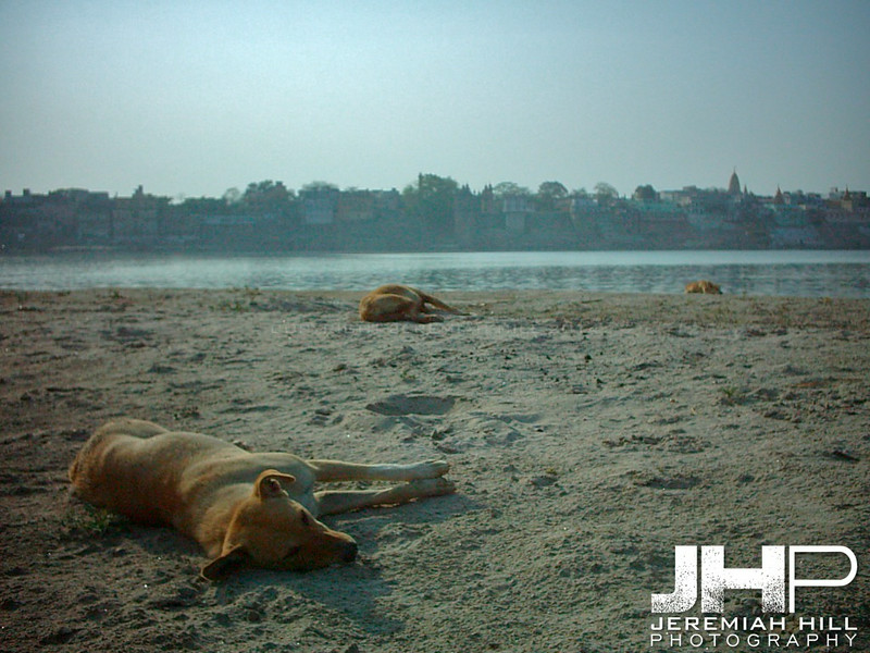 """Where Sleeping Dogs Die"", Varanasi, Uttar Pradesh, India, 2005 Print INDIA8-33V2"