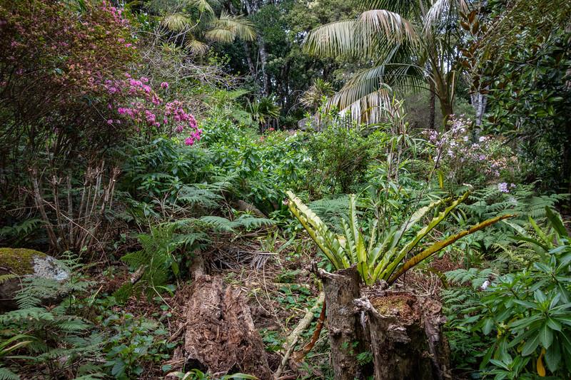 O'Reilly's Rainforest