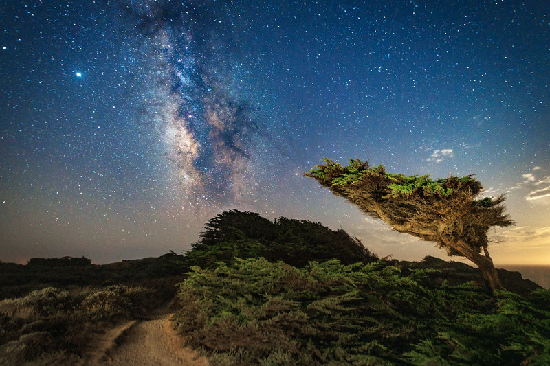 Windswept Cypress & Milky Way, Sea Ranch, CA