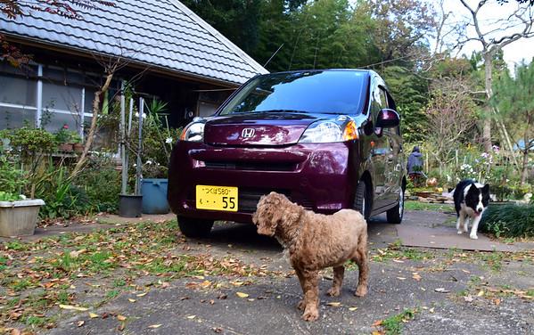 Purple Life at Satori -- 23 Nov 2020 (49)