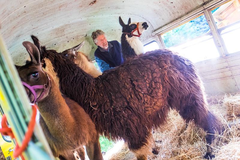 Jay Waltmunson Photography - Wallowa Llamas Reunion - 052.jpg