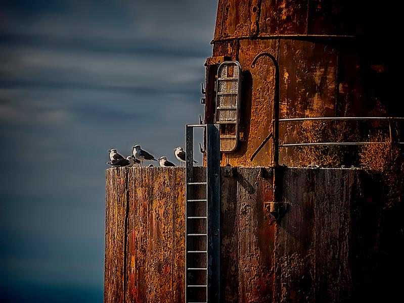 fishing trip - lighthouse seagulls(p).jpg