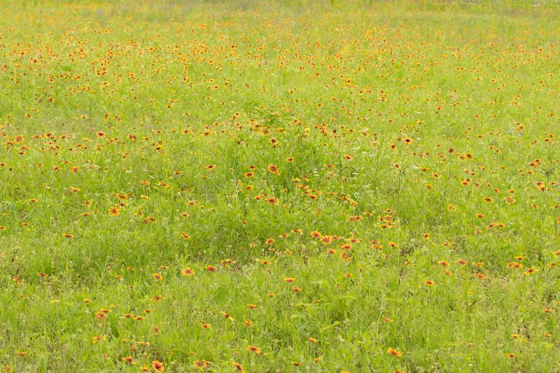 Prairie View 3 May 2020-04906.jpg