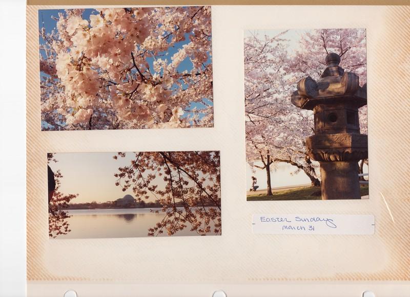 3-31-1991 Cherry 1.jpg
