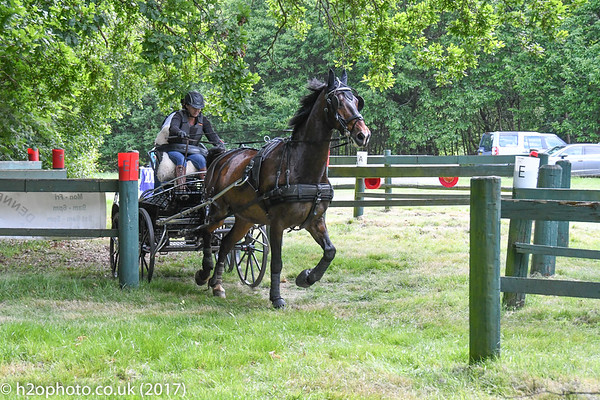 Carriage Driving - WPEC (04-Jun-17)
