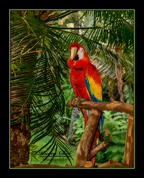 z sm red parrot.jpg