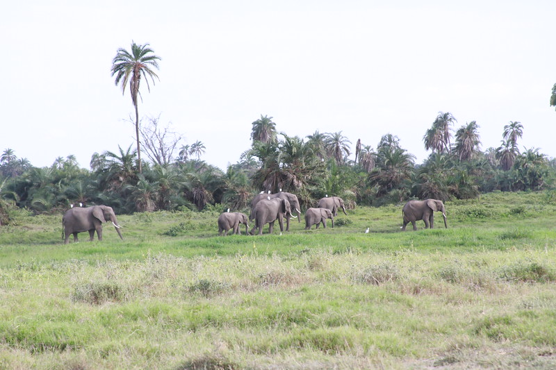 Kenya 2019 #2 561.JPG