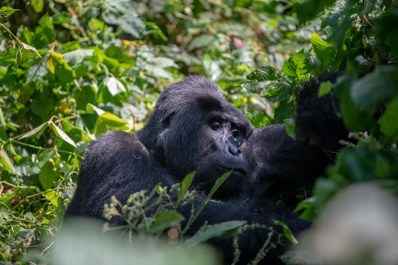 Uganda_T_Gor-948.jpg