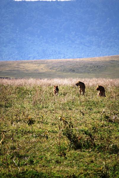 Ngorongoro (58).JPG