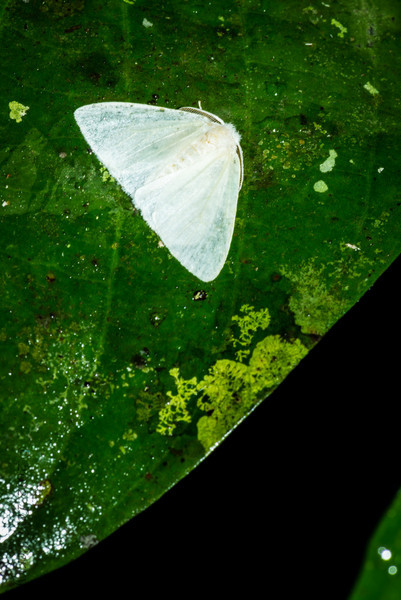 INSECT - Moth-1235.jpg