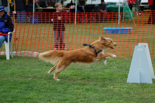 Flyball, Geelong, May 2006 (Part 4)