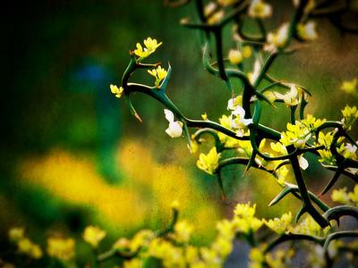 Plants + Foliage