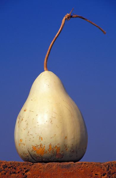 Butternut (Marrow) Fruit (Burma)