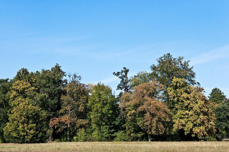 Muskau, Unterpark, Blick über Tränenwiese Richtung Kavalierhaus/Moorbad
