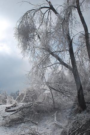 Freeze Frames - January 2009