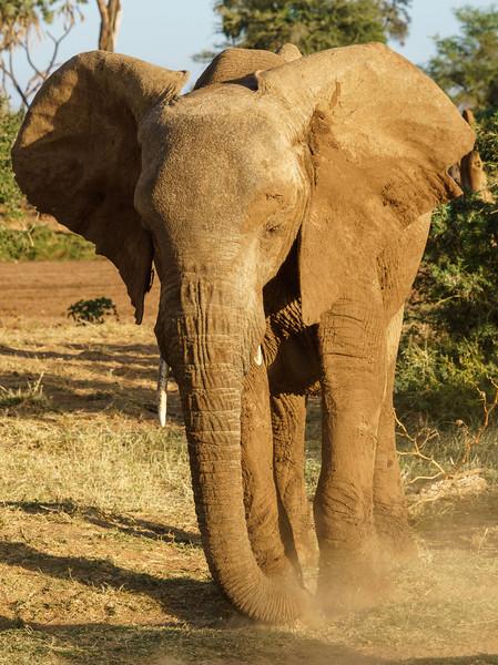 Kenya 2015-01195.jpg