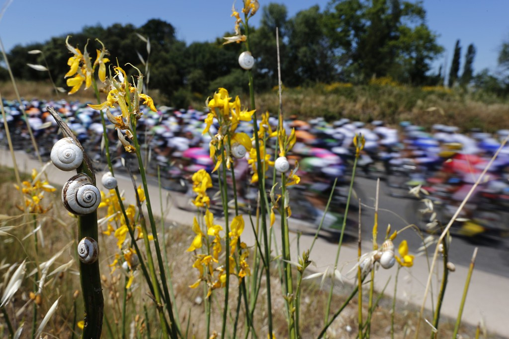 . Snails are pictured as the pack rides behind during the 176.5 km sixth stage of the 100th edition of the Tour de France cycling race on July 4, 2013 between Aix-en-Provence and Montpellier, southern France. JOEL SAGET/AFP/Getty Images