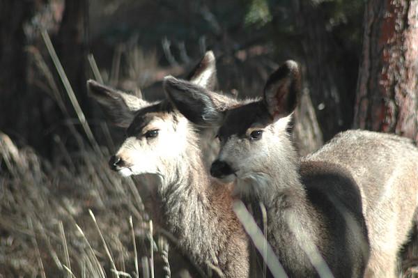 Wildlife - Backyard