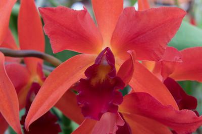 01_Orchids