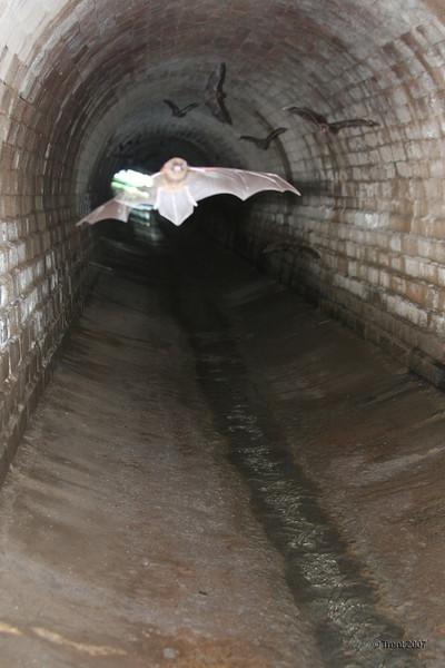 Burford's Batcave, Brisbane. Photo by Trent.