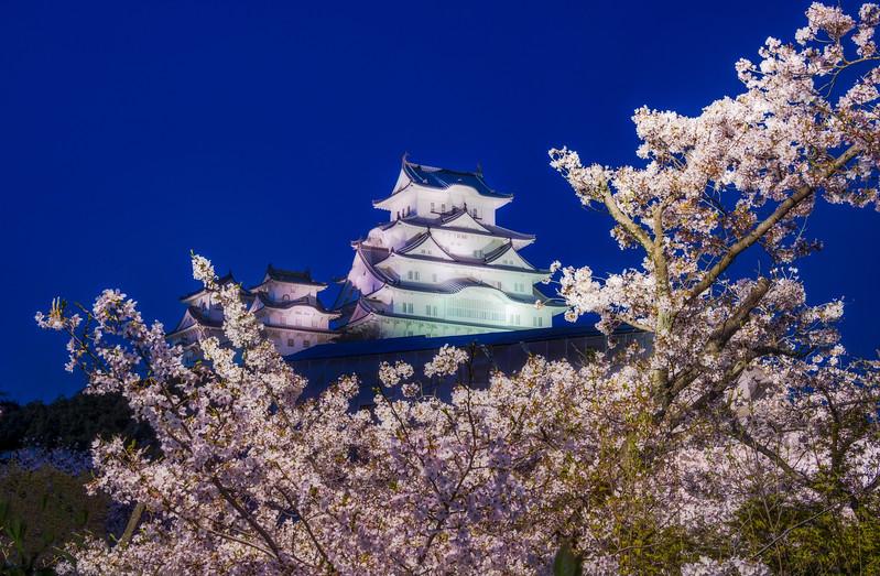 himeji-castle-japan-cherry-blossoms-tight-dusk-sakura-bricker-night-light.jpg