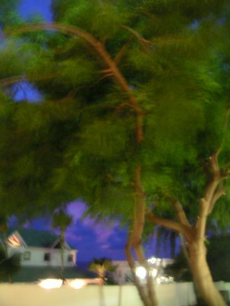 04 Tree at Night.JPG