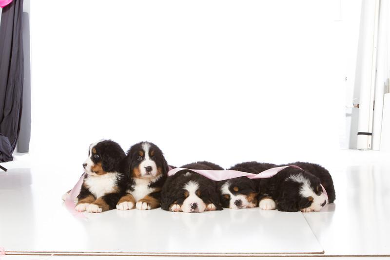 2013-Pearson Pups-Jun02-0482.jpg
