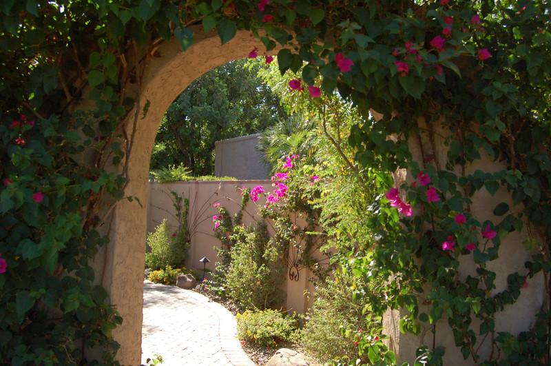 20120607_Scottsdale Back Yard_013.JPG