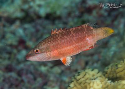 Tubbataha 2017 - More Fish!