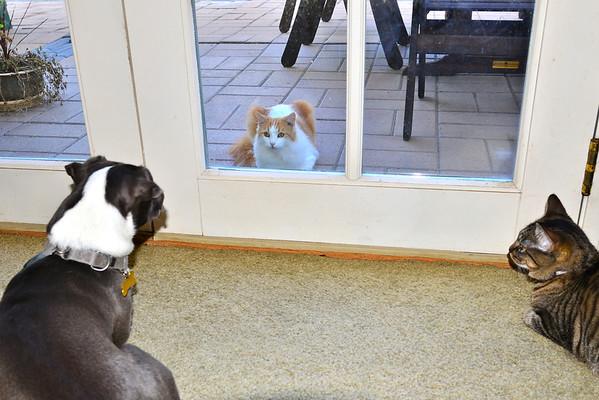 Maura, Waverly and neighbor cat