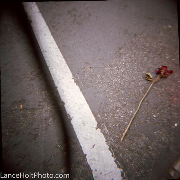 Diana street rose Scan20018.jpg