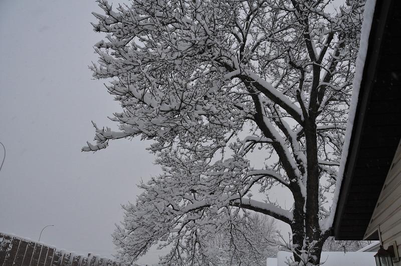 2012-12-09 First Snow of the Year - Sleeding 001.JPG