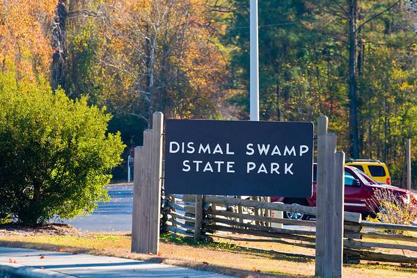 A Day at the Dismal Swamp