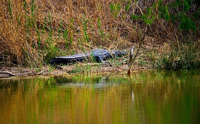 Estero Llano State Park, Texas