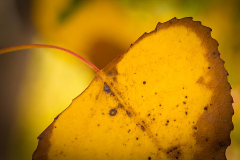 20151024-Fall Colors-34.jpg