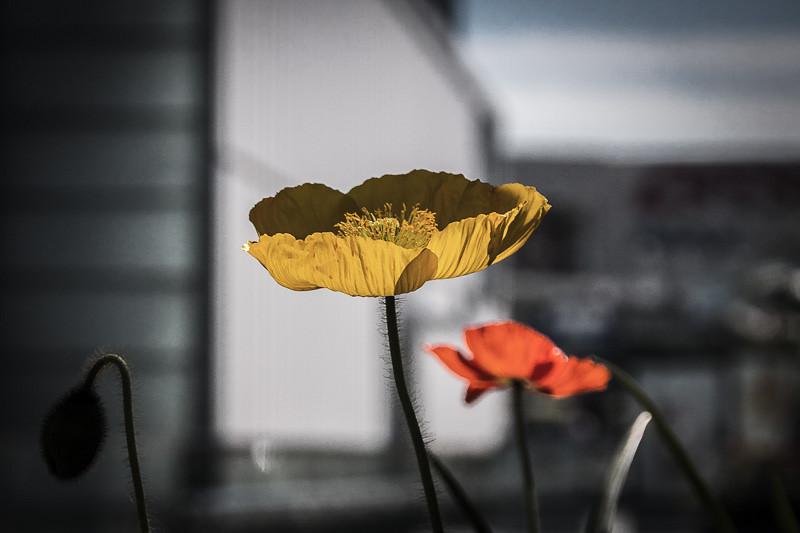 March 10 - Flowers.jpg