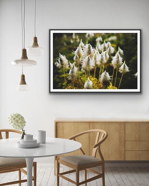 'Anemone Love' Fine Art Print Framed/Unframed