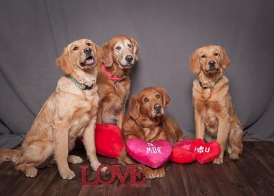 Puppy Love 2018