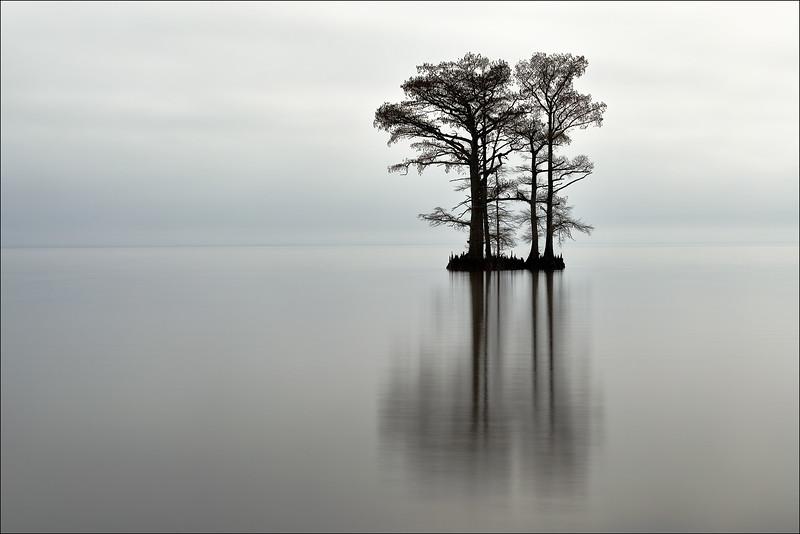 19022018-Trees-Web.jpg