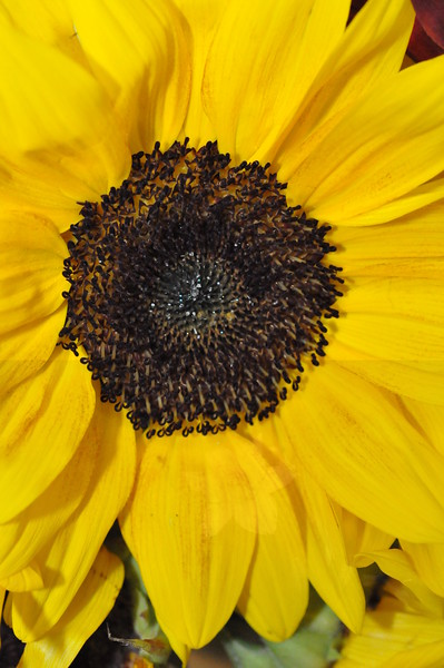 10-14-2012 Macro Nature
