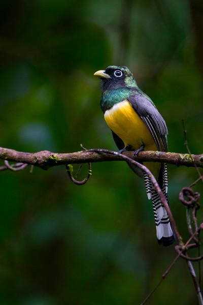 Bird_0266.jpg