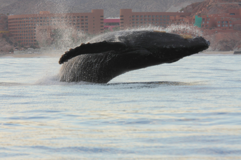 Mexico_Cabo_Whales 17.JPG