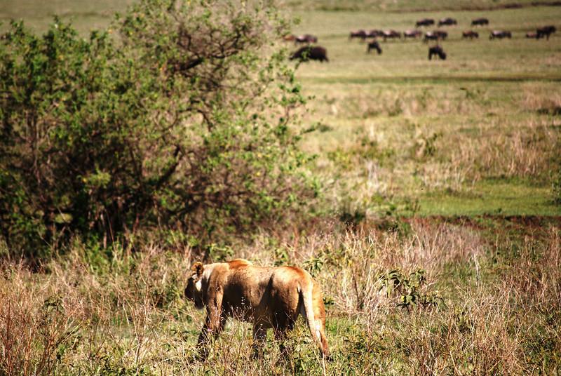 Ngorongoro (78).JPG