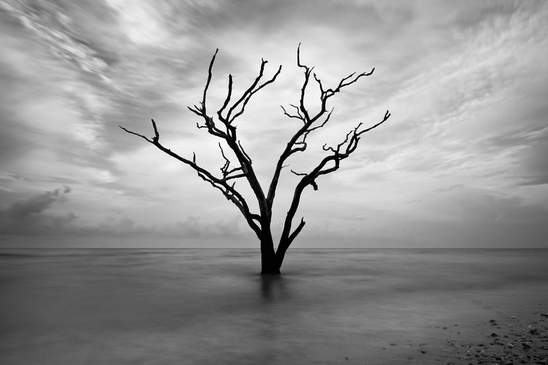 Rush Botany Bay Ediston Island Black and White crop.jpg