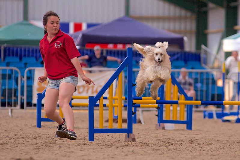 small dog final 1254.jpg