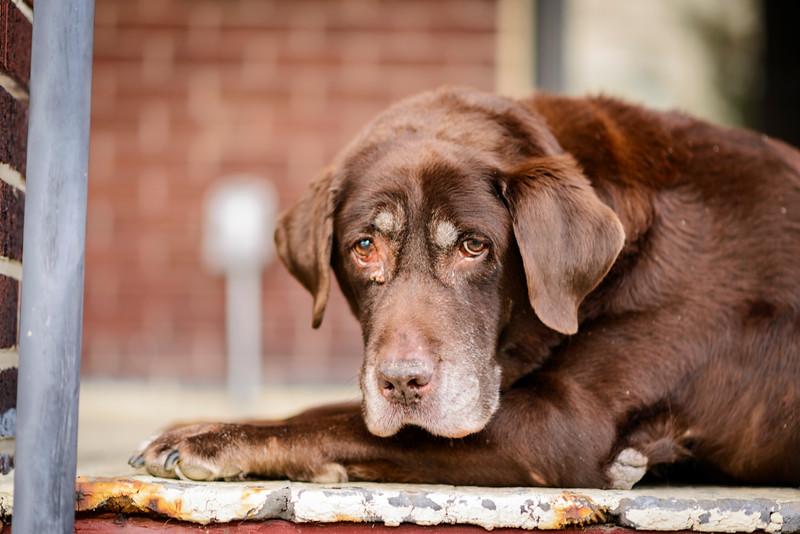 Dog Portraits-4489.jpg