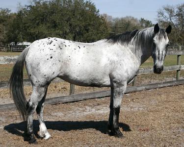 Horsefleet 2-18-06