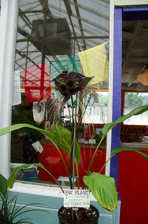 Shelldance Orchids