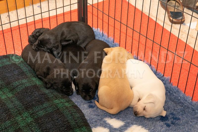 Weika Puppies 2 Mar 2019-8507.jpg