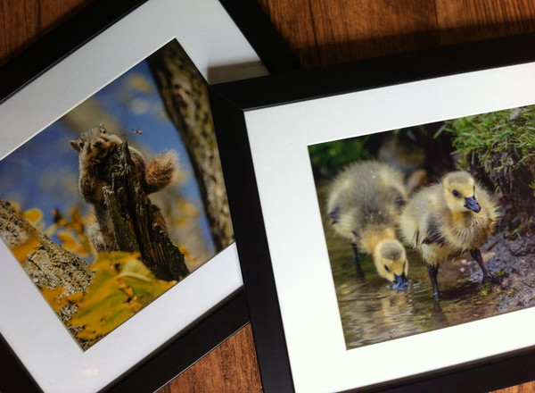 "Purchase these prints and more at The Eyrie in Ypsilanti's historic Depot Town. For store hours and location, visit  <a href=""http://www.theeyrie.net"">http://www.theeyrie.net</a>."